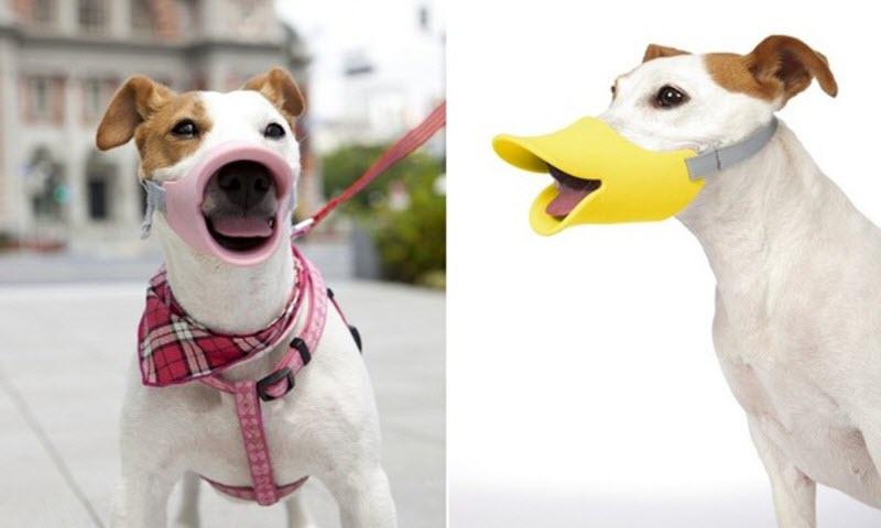 Семь интересных аксессуаров для собак