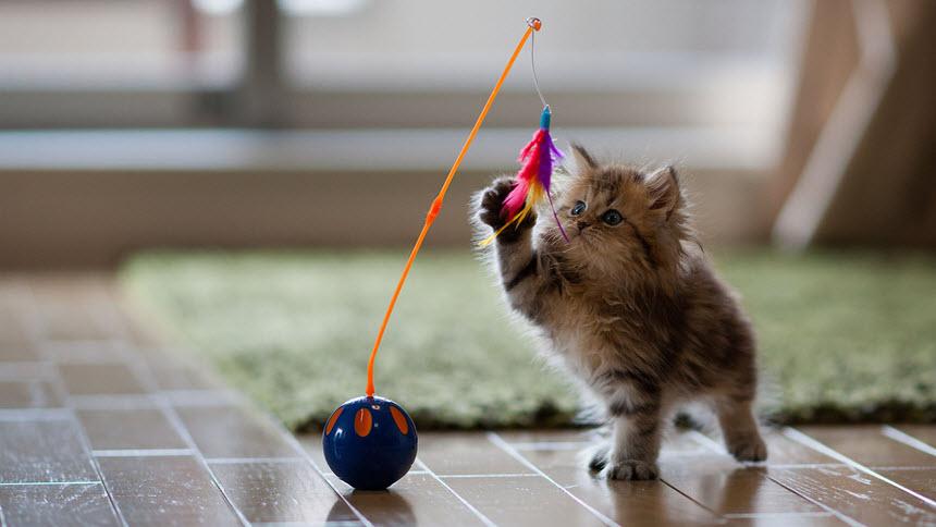 Правила воспитания домашнего котенка