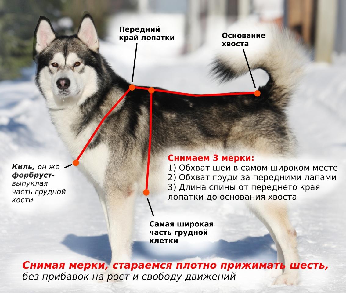 Шлейки для собак
