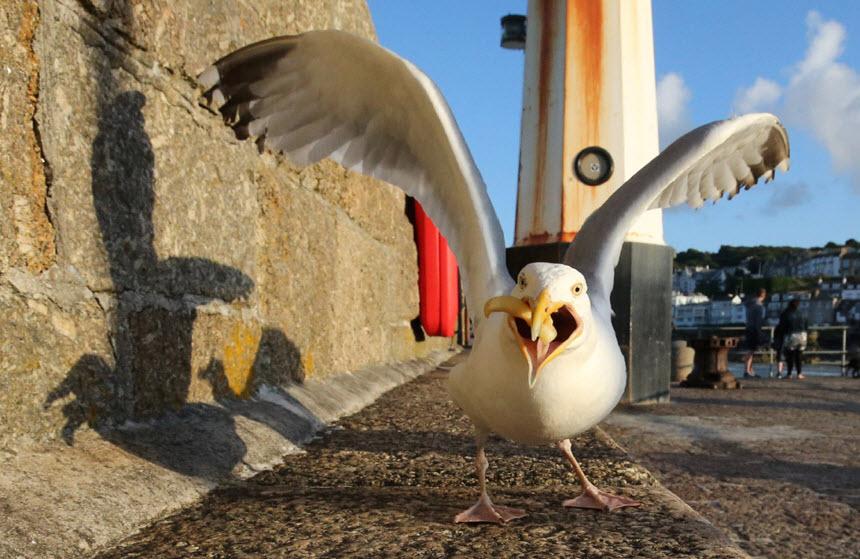 Знакомые незнакомцы: водоплавающие птицы полуострова Крым