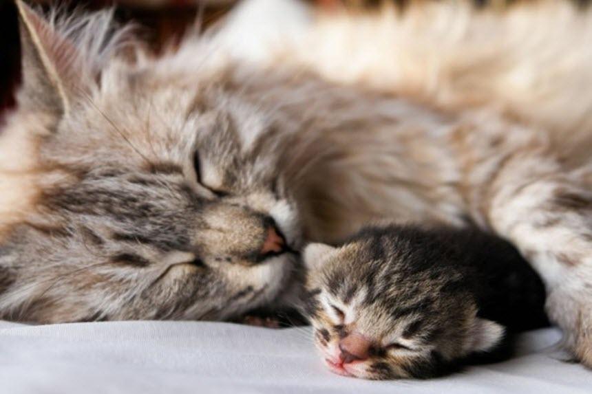 Как помочь кошке при проблемных родах