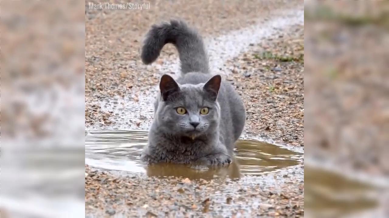 Кошка любит играться в луже