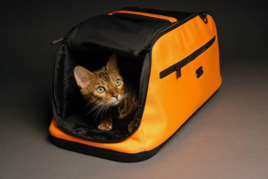 Все самое необходимое для котенка