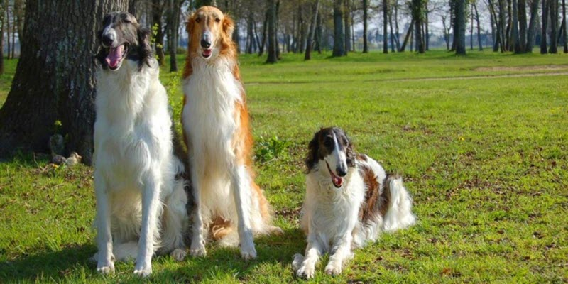 Интересные факты про породы собак