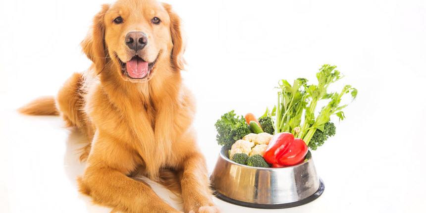 Как выбрать лакомство для собаки?