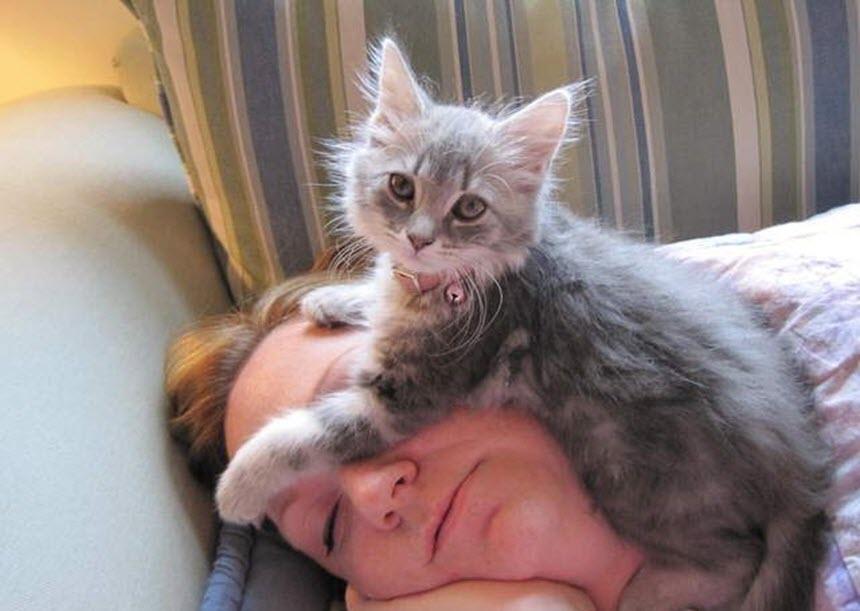 Что лечат наши кошки?