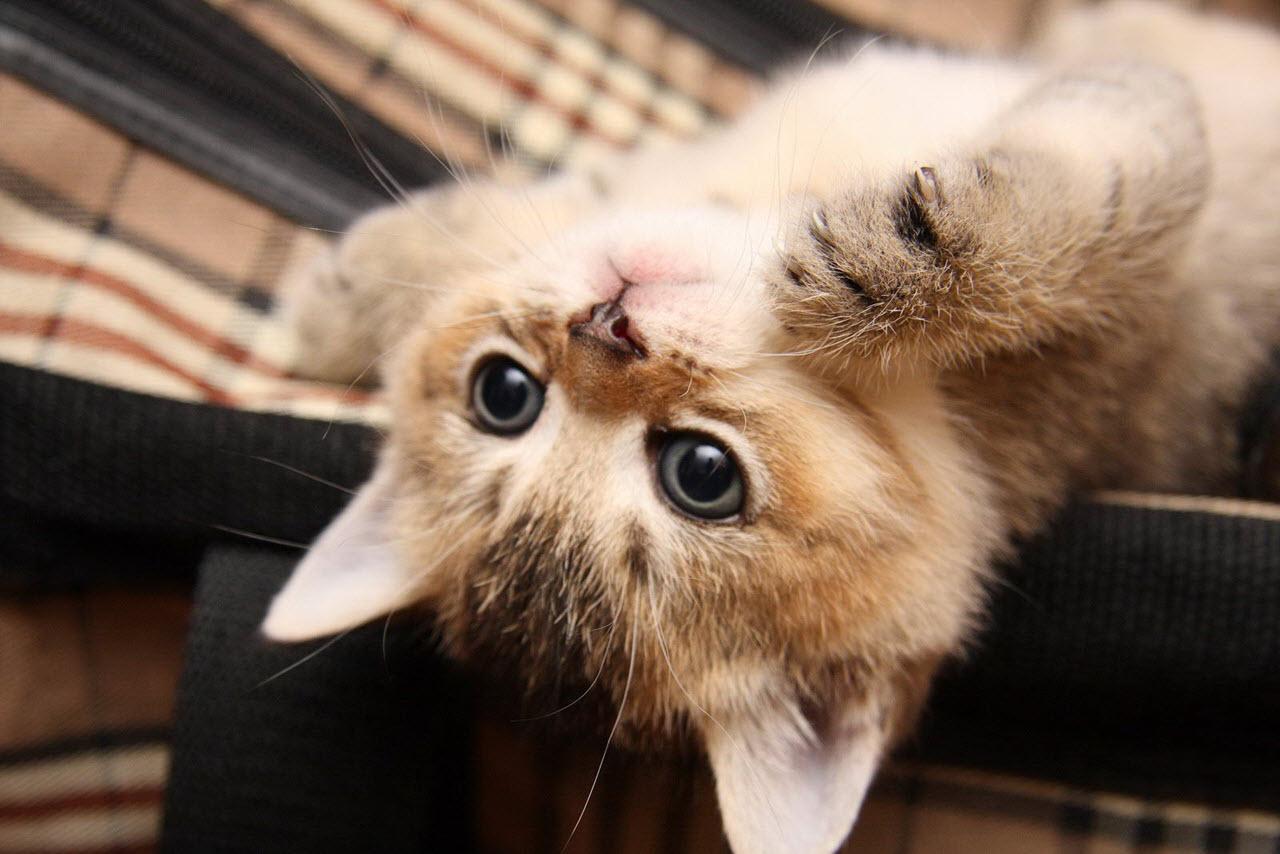 Правила содержания и воспитания кошек