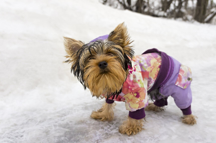 Нужна ли собакам теплая одежда зимой?