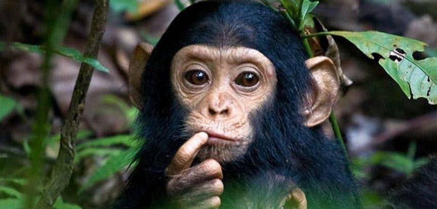 10 Опасных экзотических животных