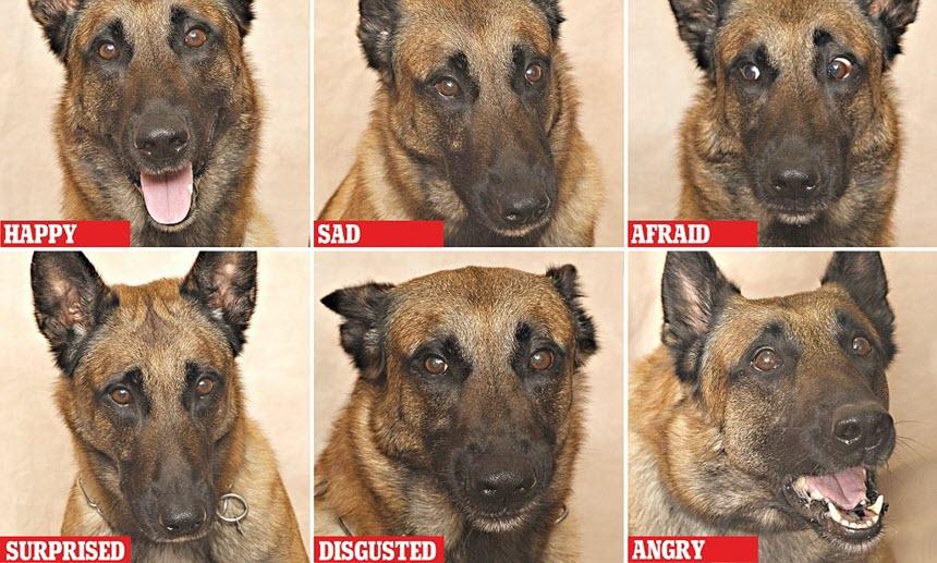 Как узнать настроение собаки?