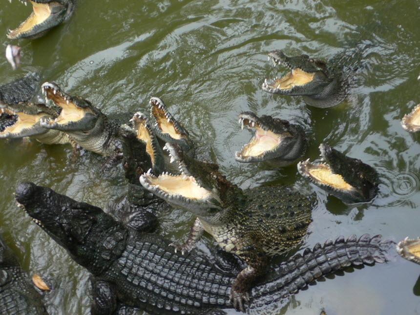 Содержание крокодилов