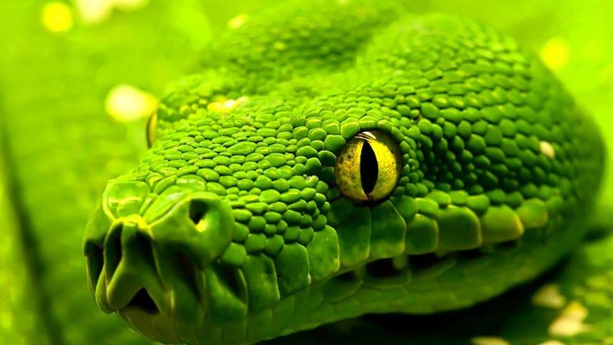 Немного про змей