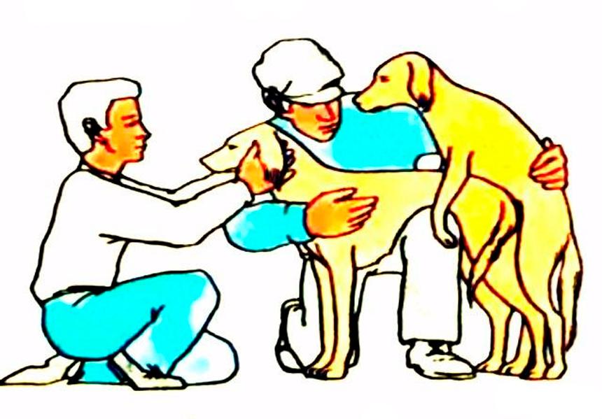 Как правильно вязать собак?