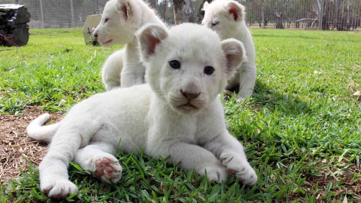 Самые дорогие домашние животные