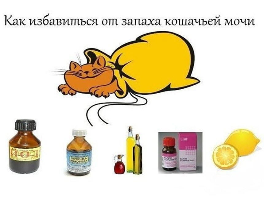 Как нейтрализовать кошачий запах?