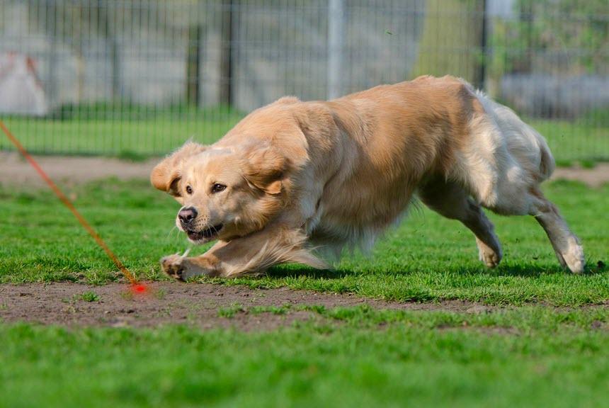Способы тренировки собаки