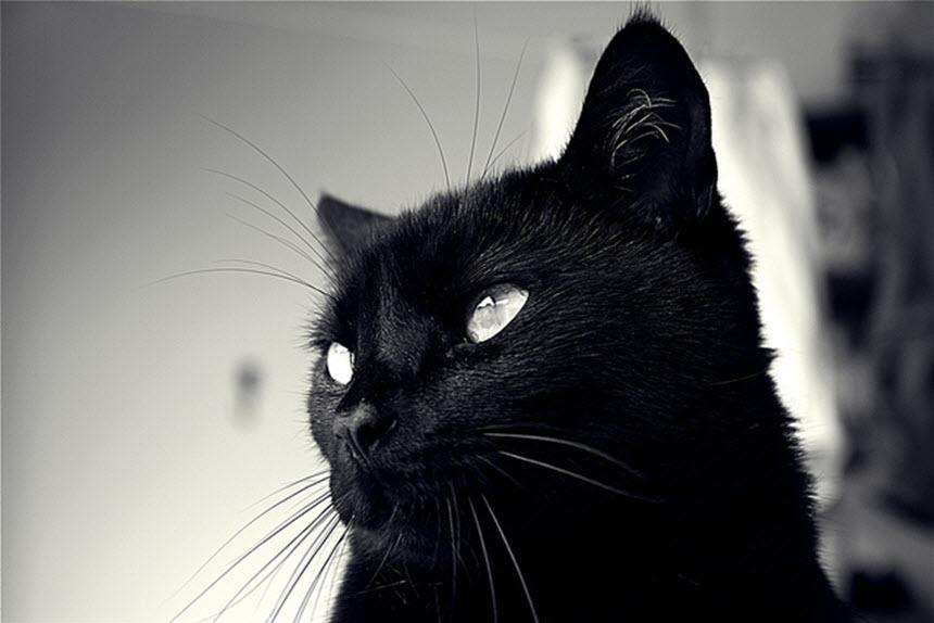Бери пример с кота!