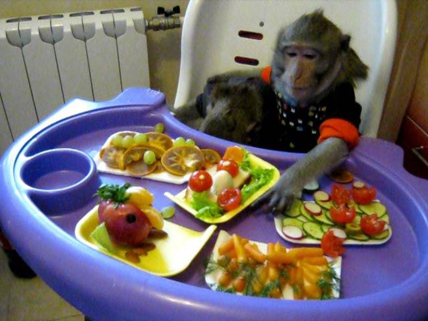 Чем кормить домашнюю обезьяну