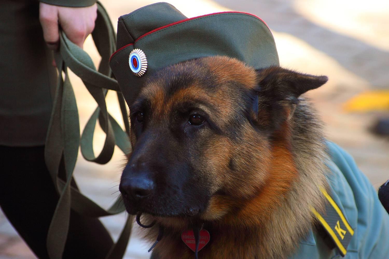 середине собака телохранитель картинки того, что китай