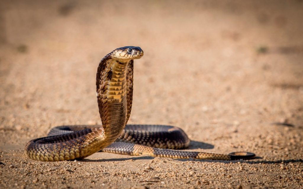 Самые ядовитые животные в мире