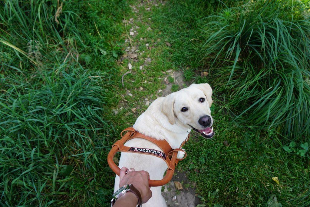 Мифы о собаках-поводырях