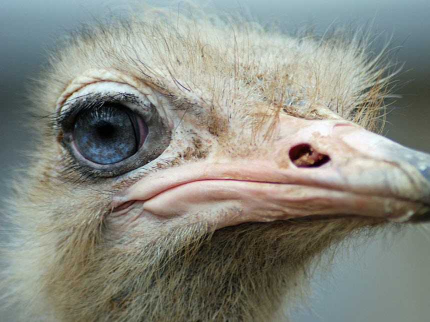 Животные с самыми удивительными глазами