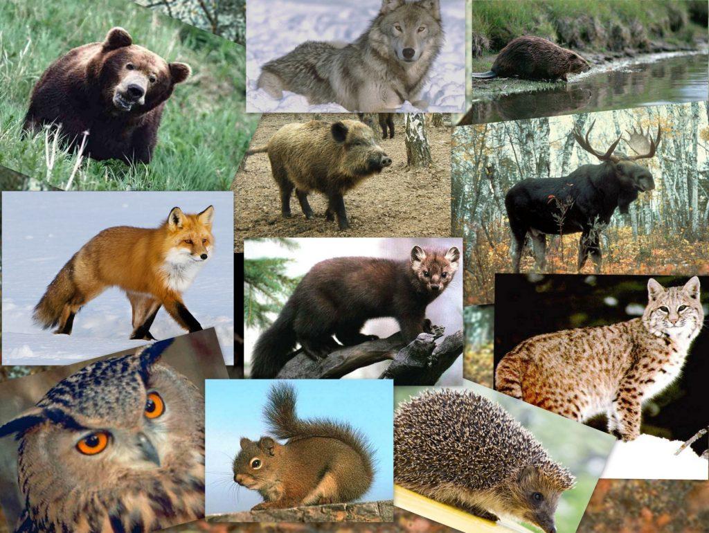 О лесной фауне