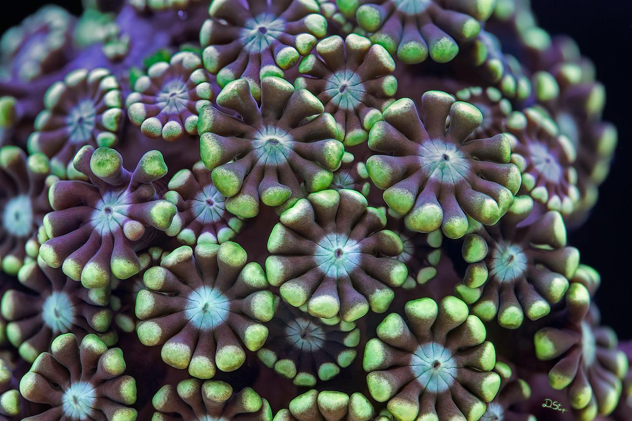 Кораллы - растения или животные?!