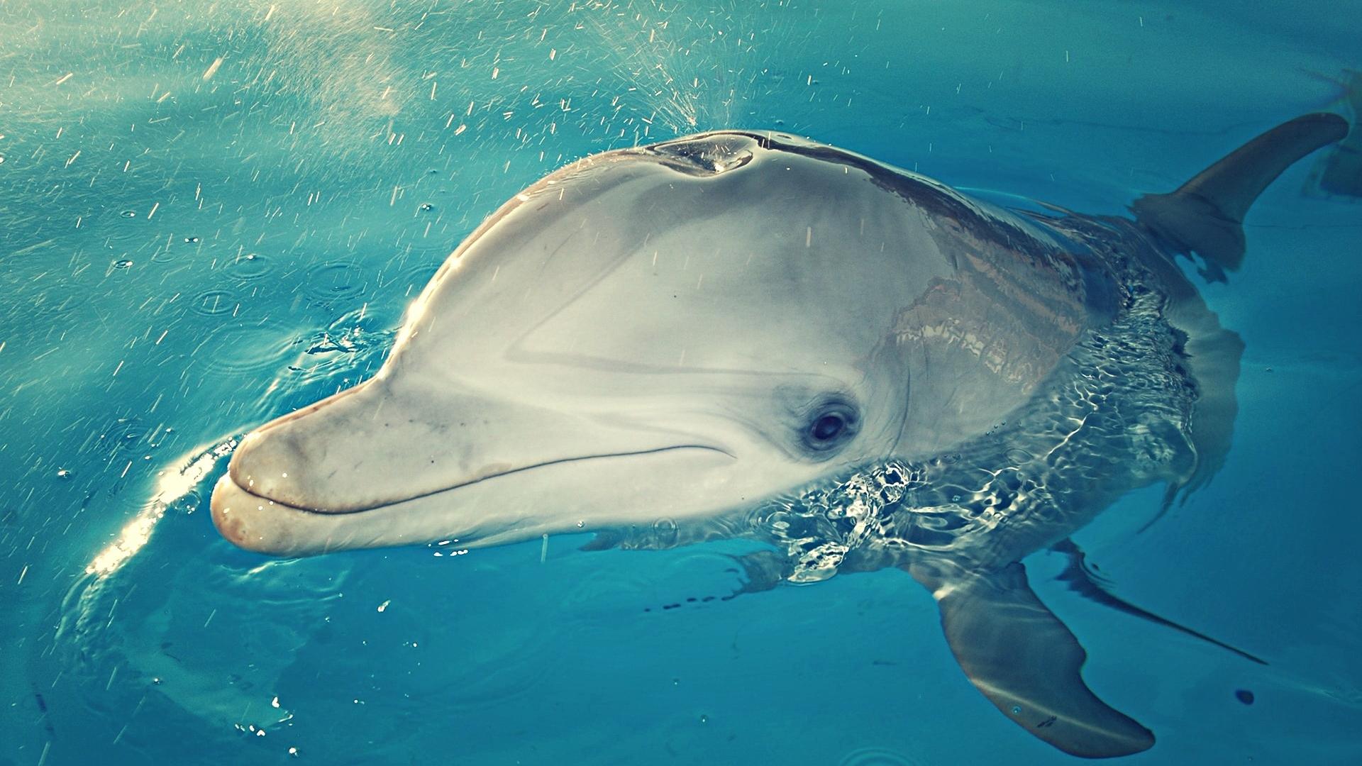 Удивительные дельфины