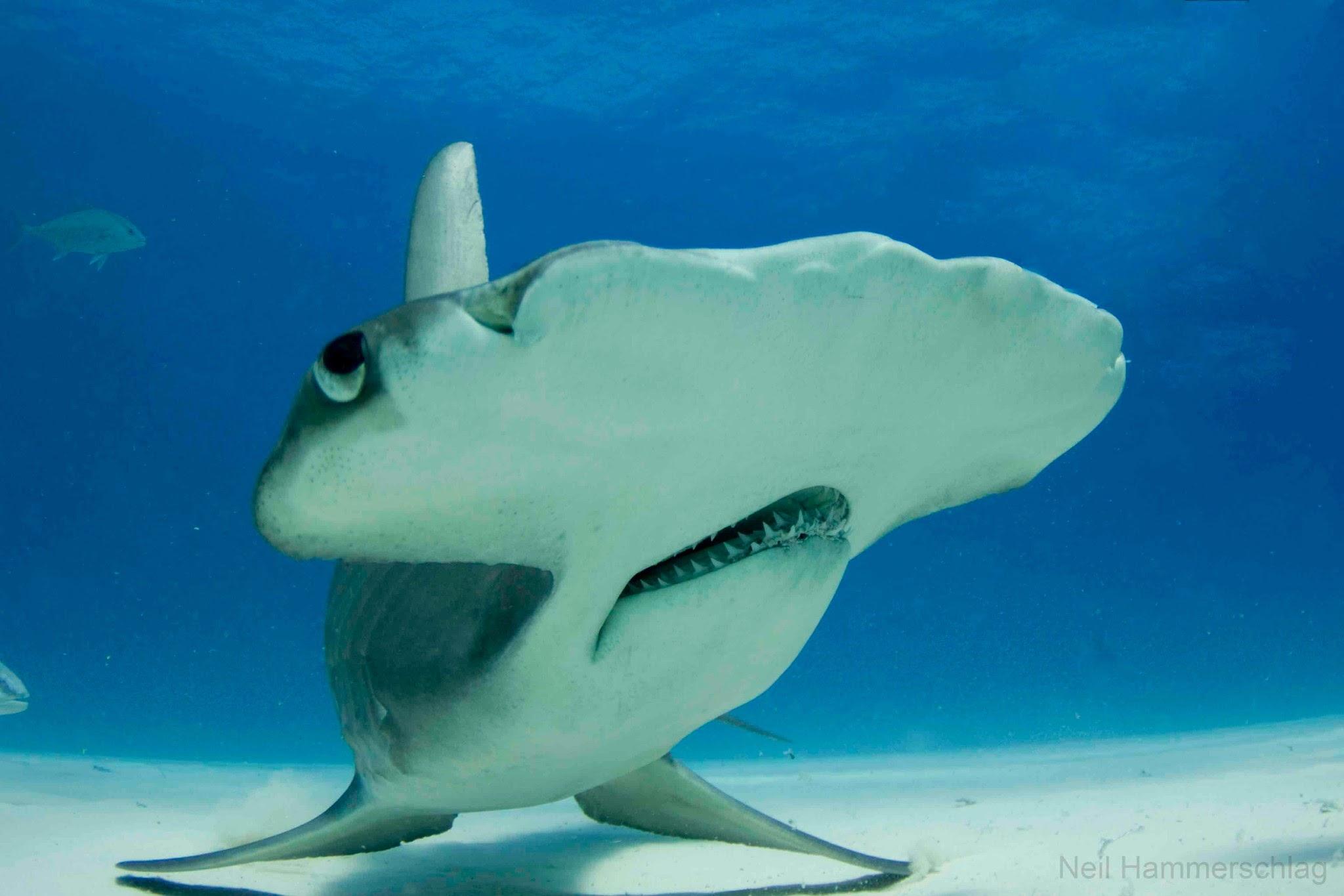 9 интересных видов акул
