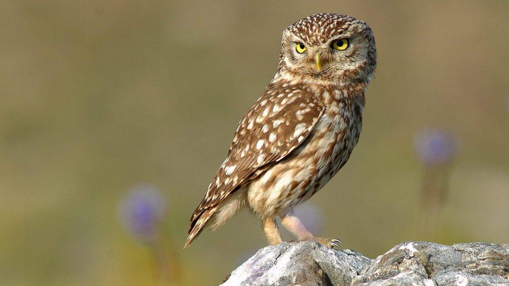 Знаете ли вы этих птиц? (разновидности сов)