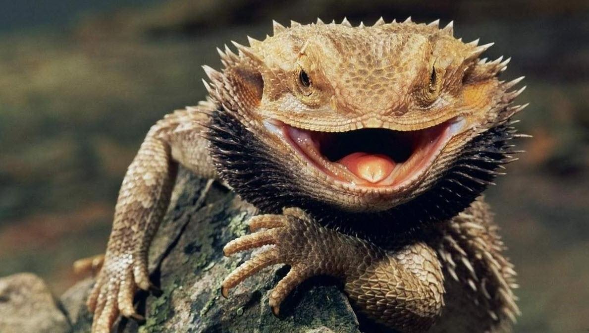 Ящерицы научились изменять пол из-за глобального потепления