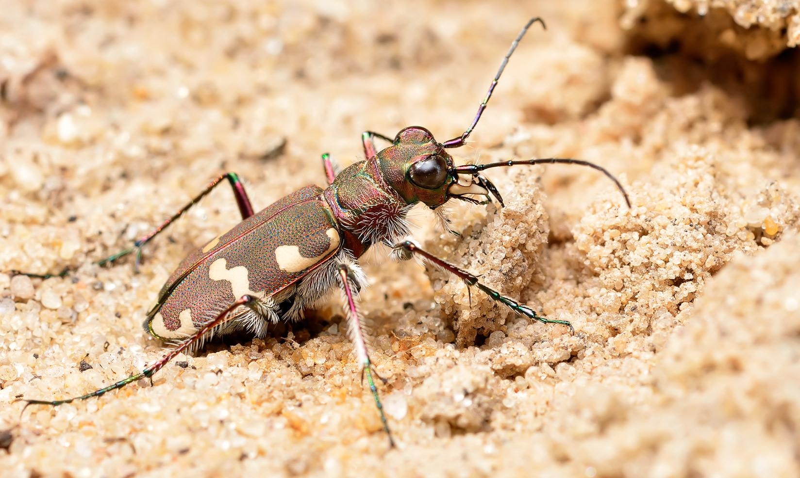 Способы защиты насекомых от врагов
