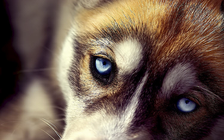 Животное из приюта: 7 причин «за»