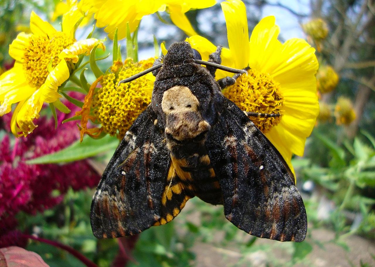 Прекрасные создания - бабочки