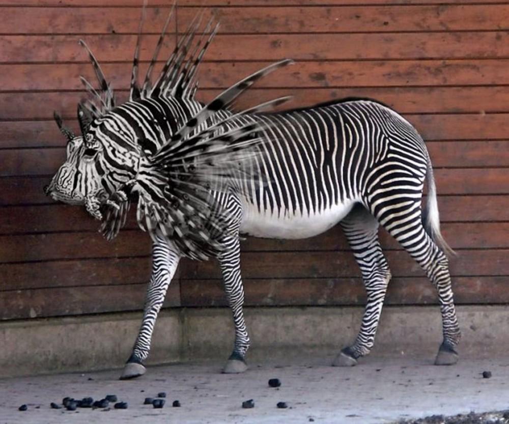 Представьте себе... (15 фото нереальных животных)