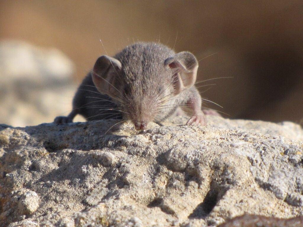 ТОП-6 самых маленьких существ на нашей планете