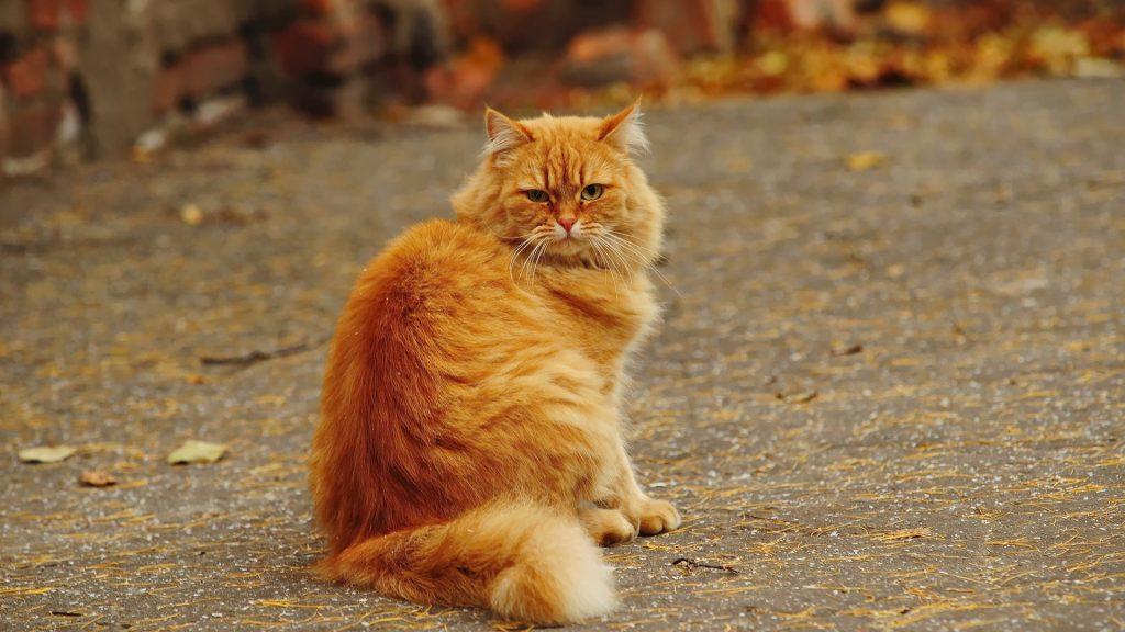 Вот это кот!