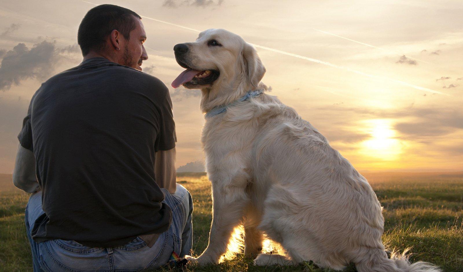 Продукты, опасные для здоровья собаки