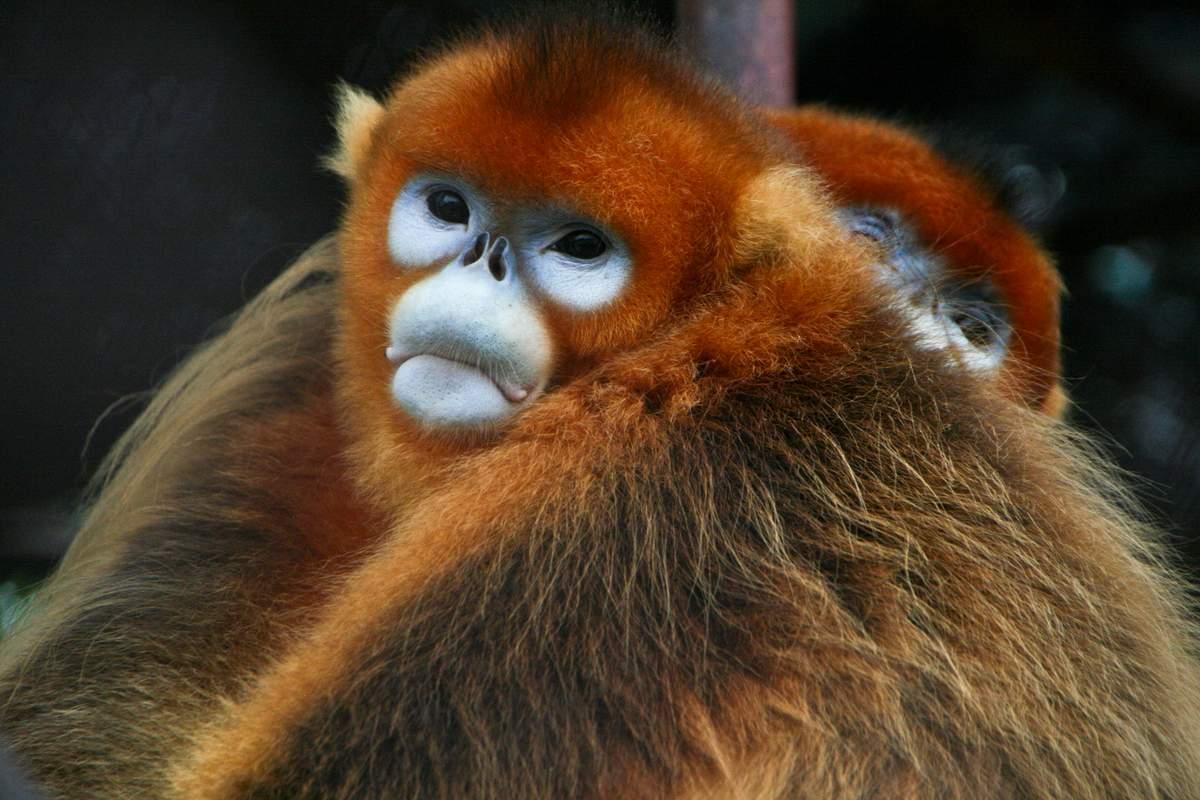 Необычные и редкие животные мира (15 фото)