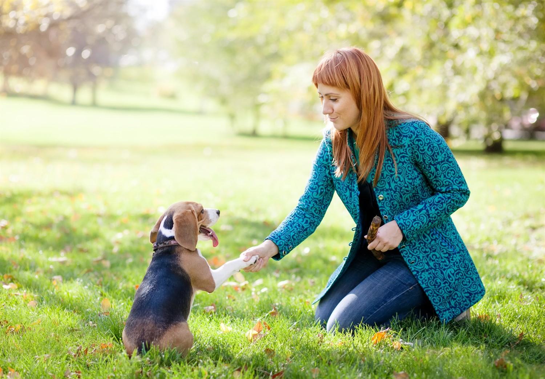 Игра - жизненная необходимость для собак