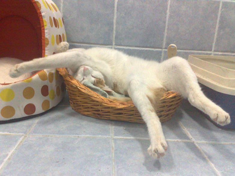 Кошки - это жидкость (15 неопровержимых доказательств)
