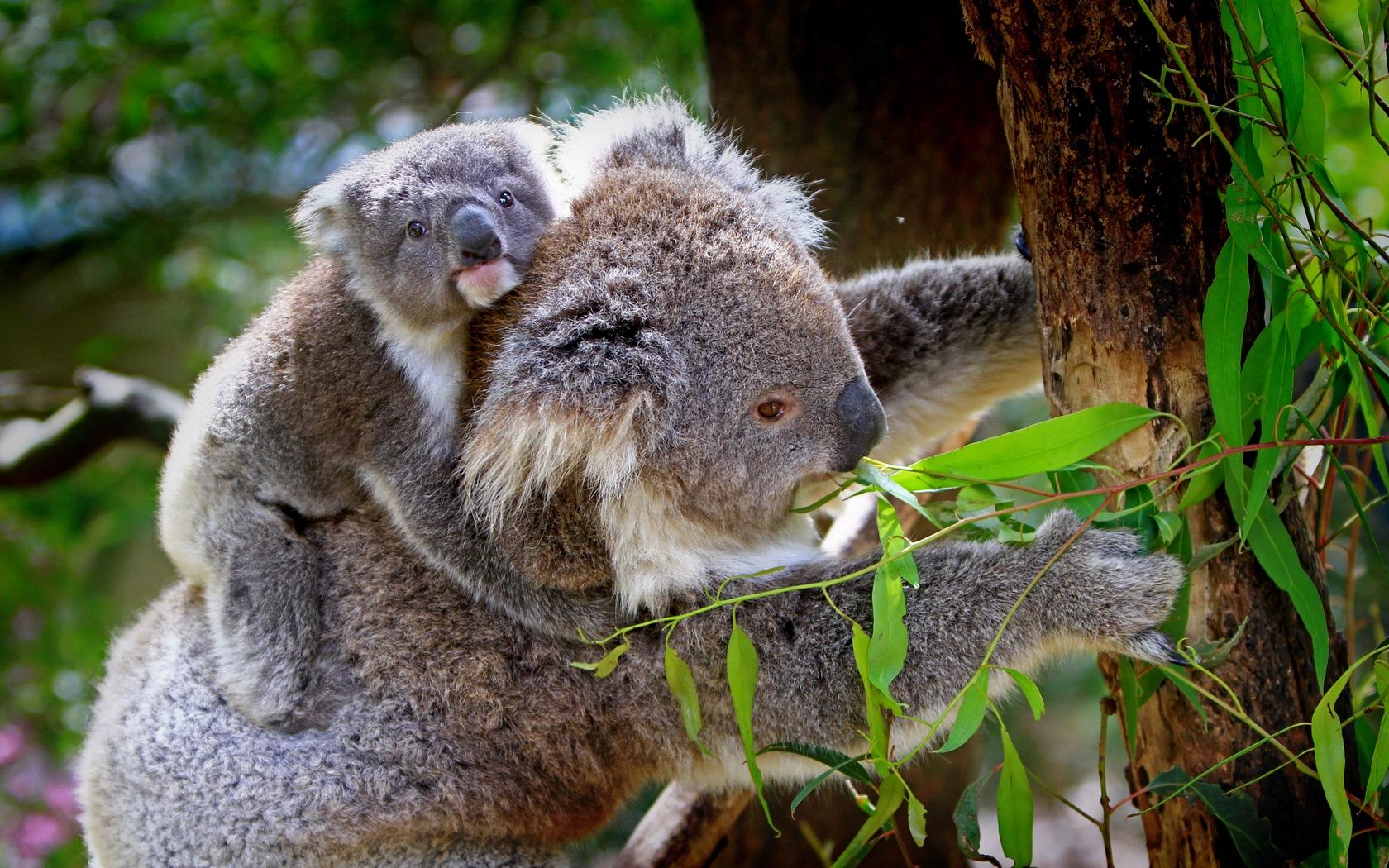 Гармония животного мира Австралии