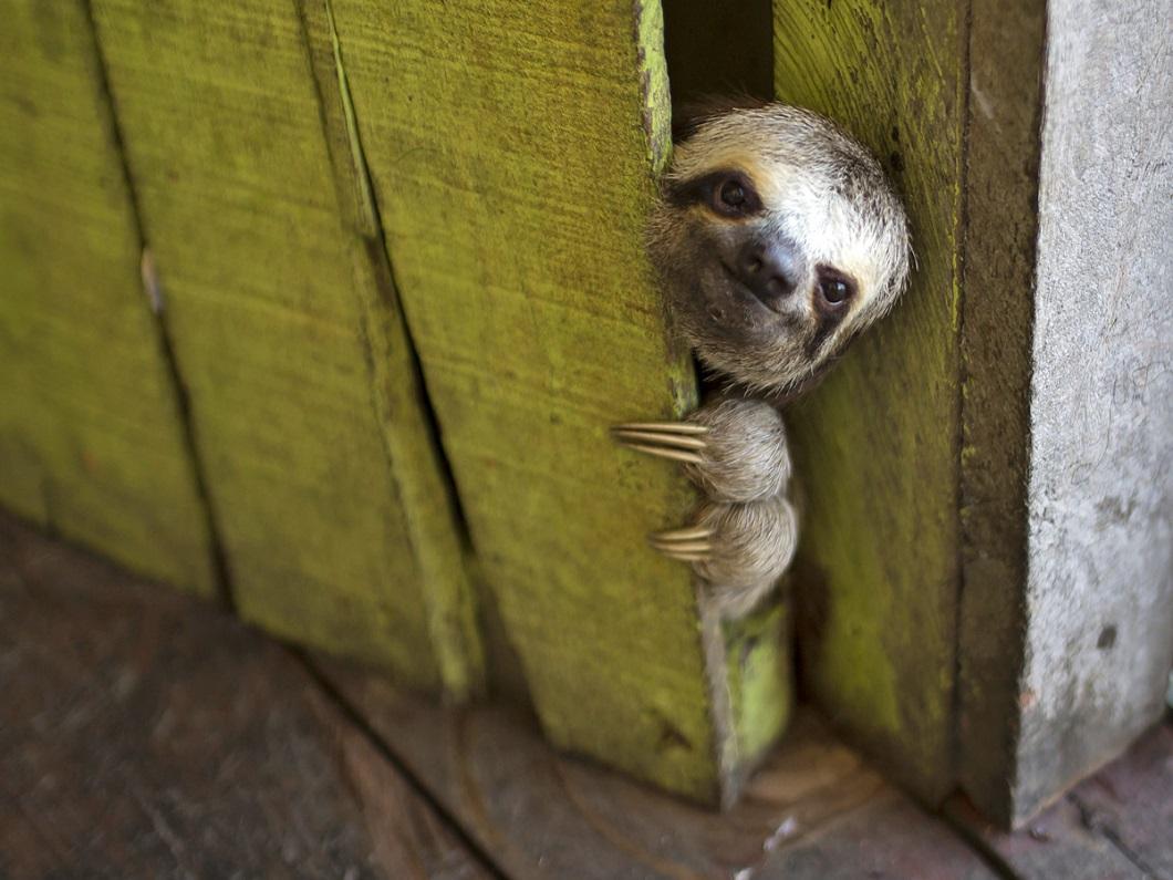 15 животных, которые просто хотели поздороваться
