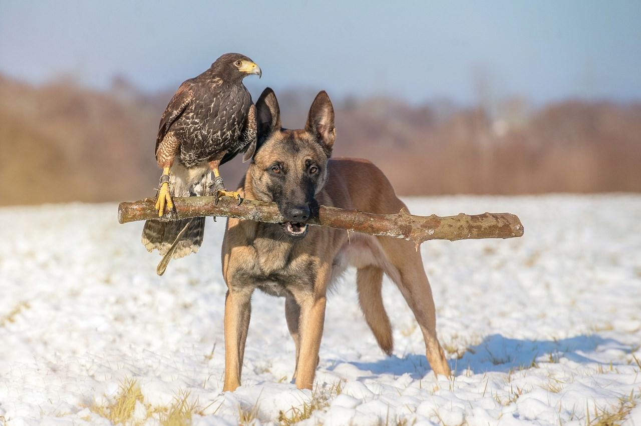 Необычная дружба животных (30 фото)