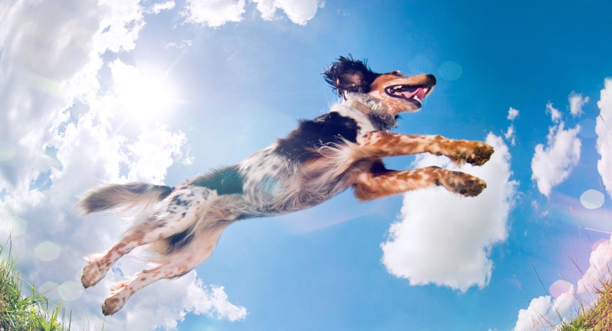 Как отучить собаку прыгать на людей?