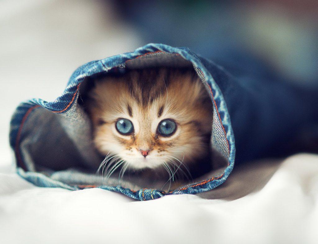Кошки в жизни человека