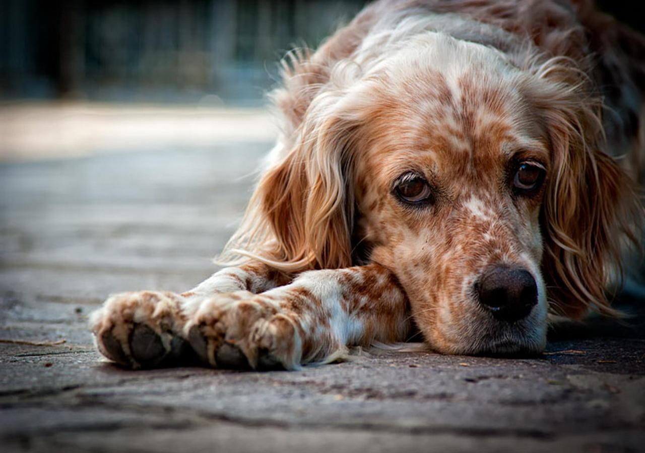 Распространённые мифы о собаках
