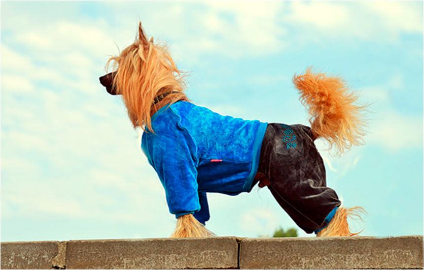 Как подобрать собачке одёжку?