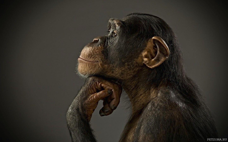 Чем наша память отличается от памяти животного?